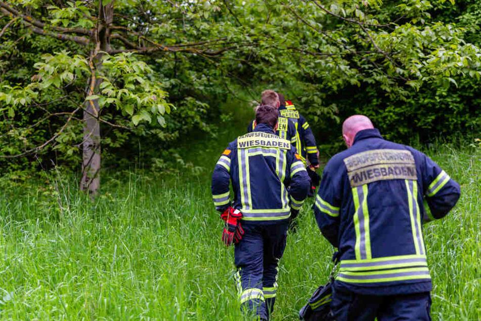 In diesem Waldstück fanden Spaziergänger den toten Mann.