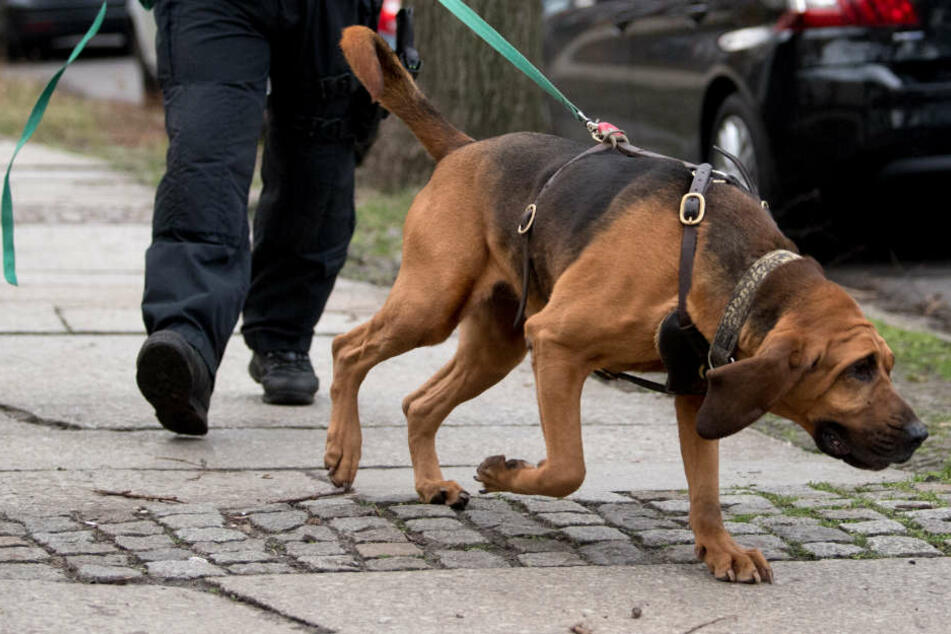 Mit Hunden suchte die Polizei nach dem Mann. (Symbolbild)