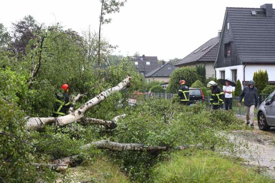 In Rahlstedt hat der Wind eine Birke entwurzelt.