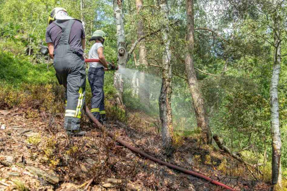 In einem Wald in Schneeberg brannte es am Dienstag auf einer Fläche von mehreren Quadratmetern.