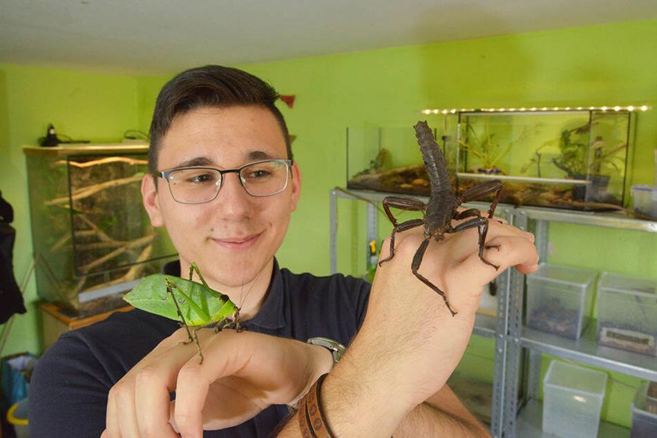 Schüler Tillmann Braun (18) ist der Insektenflüsterer von Remse. Hier zeigt er eine Malaiische Riesenblattschrecke (l.) und Gespenstschrecke (Panzerschrecke).