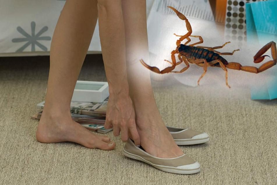 Wie man einen Skorpion Frauen anzieht