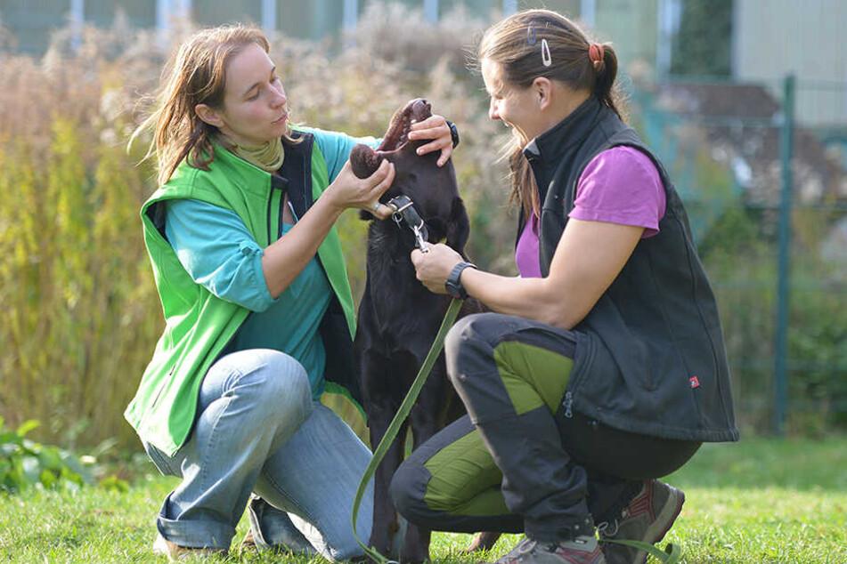 Hundetrainerin Dana Leopold (32, l.) zeigt Teilnehmerin Maria Friebe (36), wie sich Labrador Olli (1) ins Maul schauen lässt.