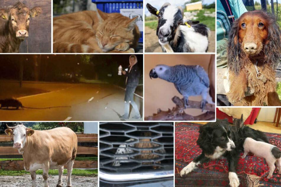 Tierisch viel los: Der animalische Jahresrückblick 2019