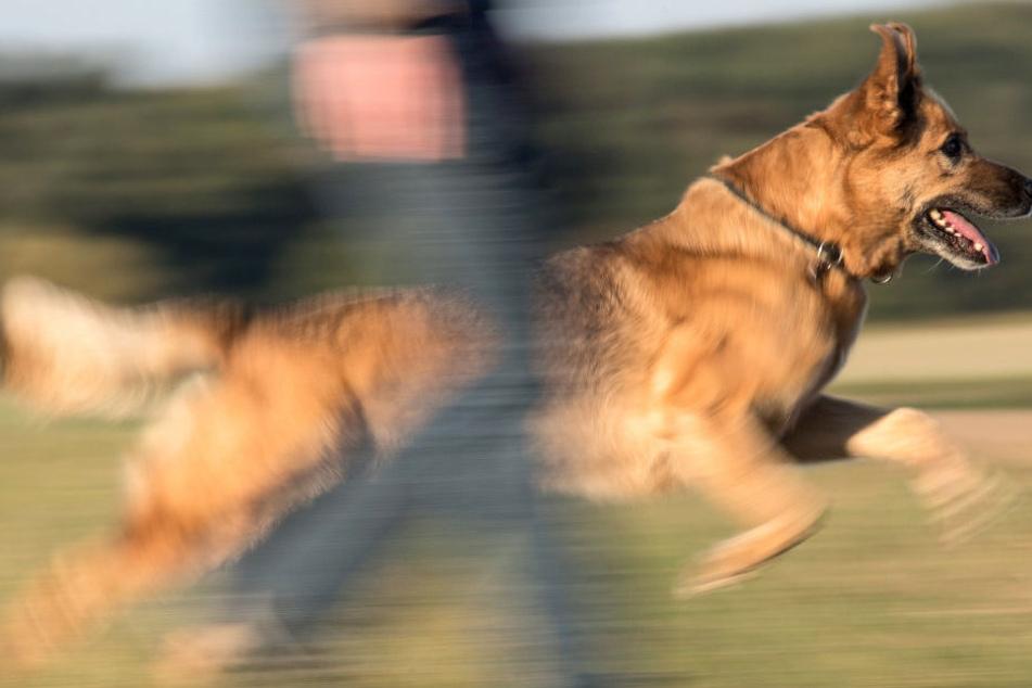 Die Halterin sah keinen anderen Ausweg, als ihren Hund zu beißen. (Symbolbild)
