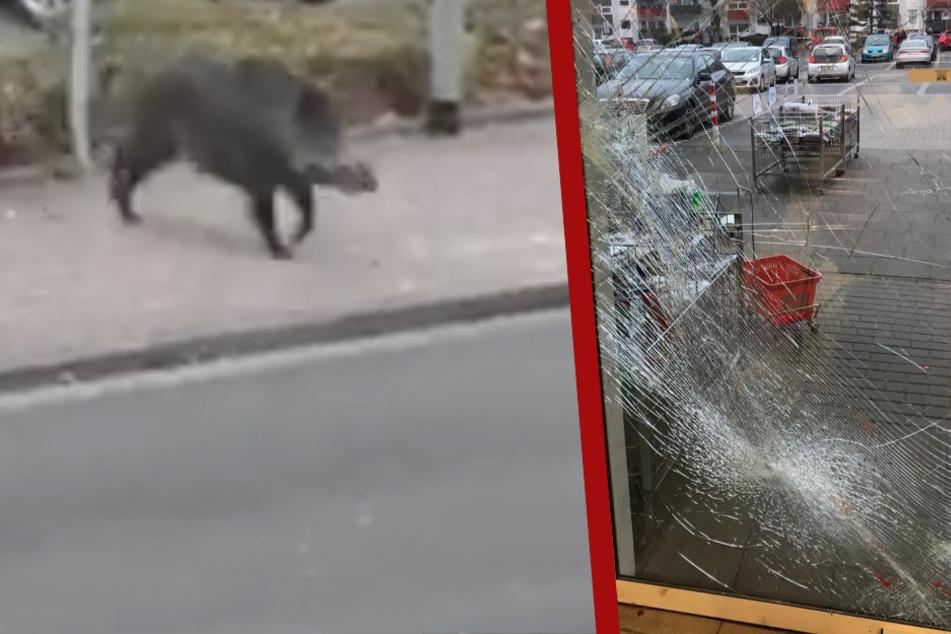 Blutige Tour bei Woolworth: Wildschwein hinterlässt Spur der Verwüstung