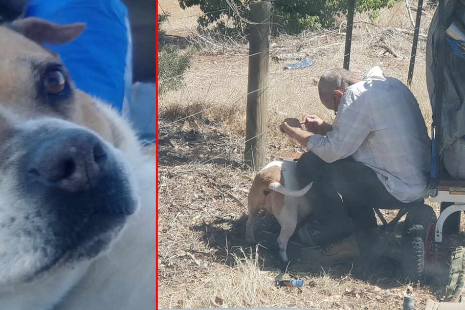 Laster-Fahrer sieht immer wieder Mann mit Hund am Straßenrand: Das ist der schreckliche Grund
