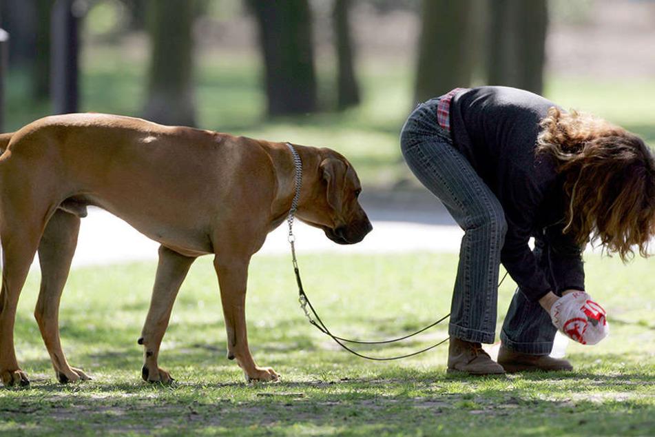 """Nach seinem """"Geschäft"""" nimmt diese Frau den Hundehaufen ihres Vierbeiners auf."""