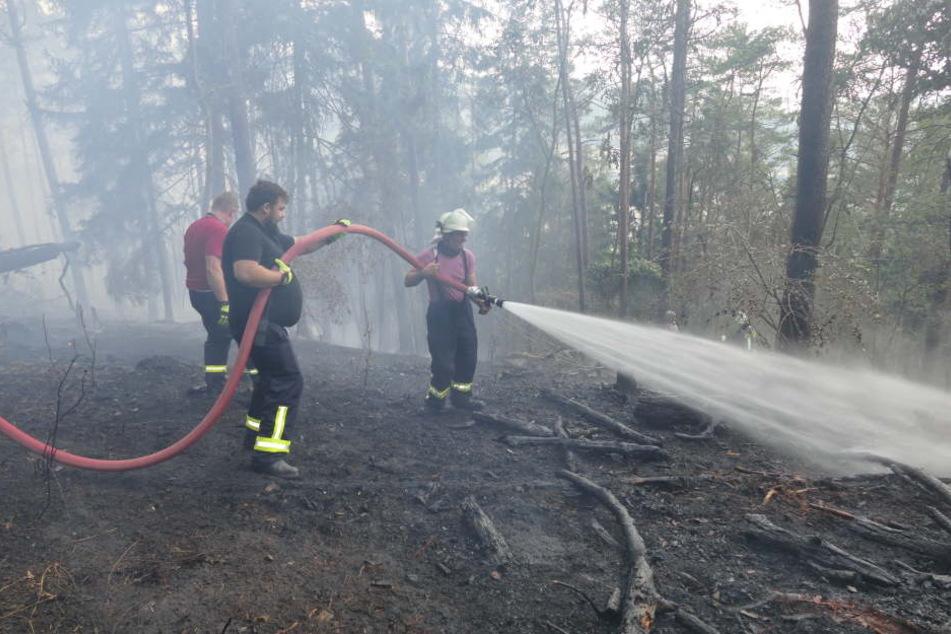 60.000 Euro Schaden: Feuer frisst Schneise durch Waldstück