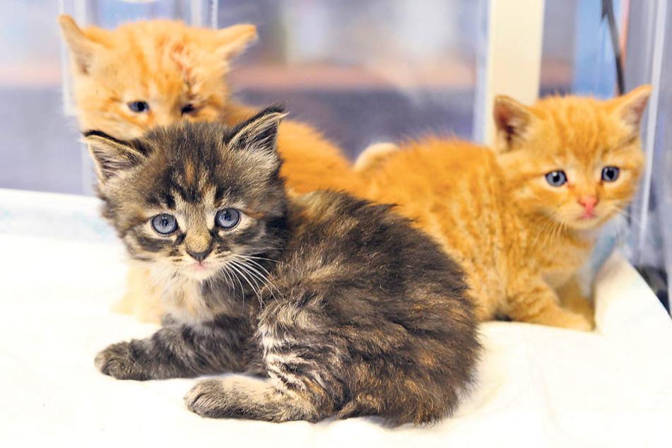 Diese drei süßen Kätzchen wurden beinahe umgebracht.