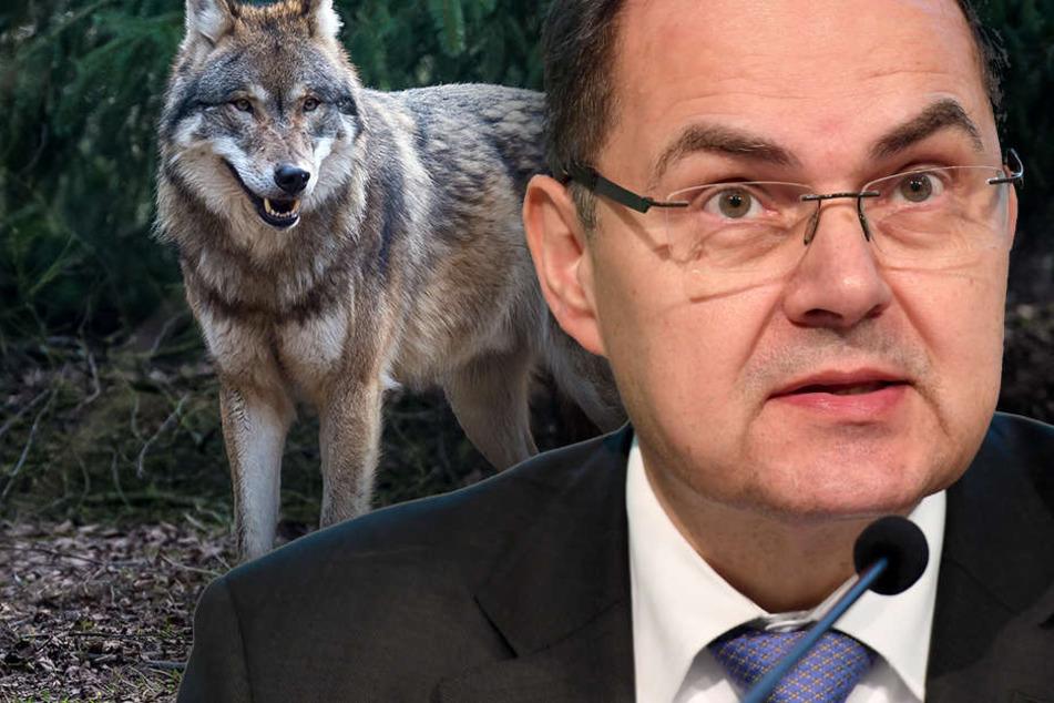 Unmissverständlich machte Schmidt klar, dass die Zeit drängt und der Wolf sich weiter ausbreitet. (Bildmontage).
