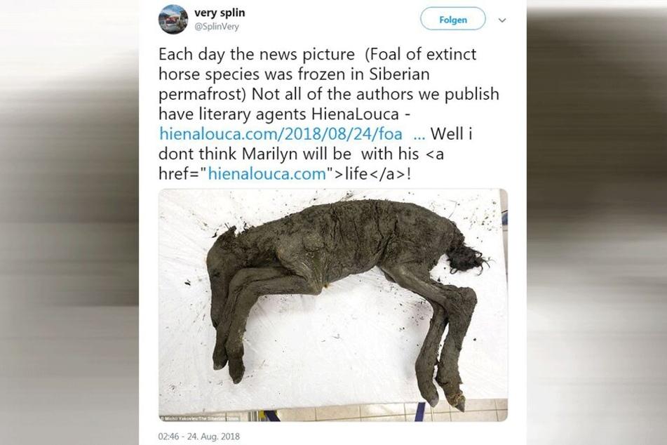 Auf Twitter wird ein Foto des 42.000 Jahre alten Pferdes verbreitet.