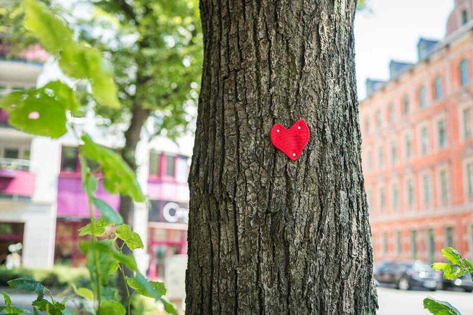 Wer nagelt Herzen an die Bäume am Kaßberg?