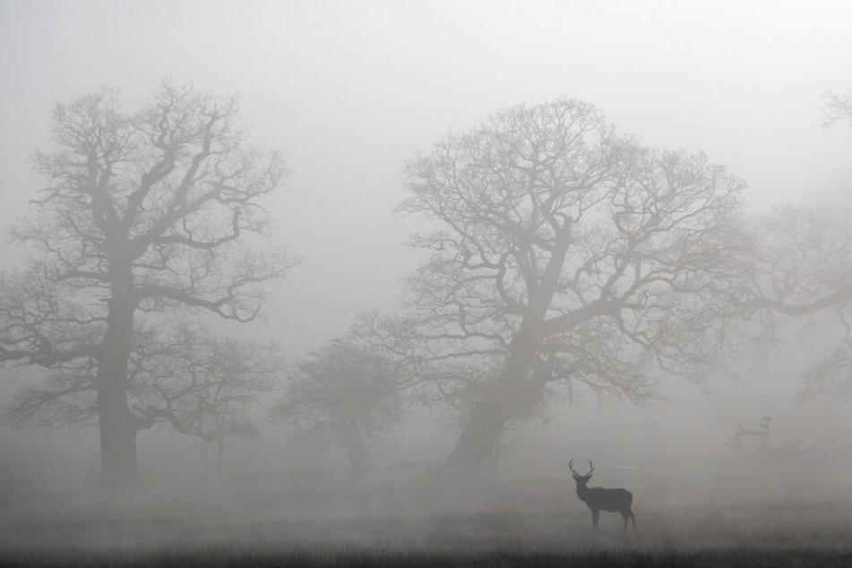 Ein Hirsch steht im Nebel. (Symbolbild)