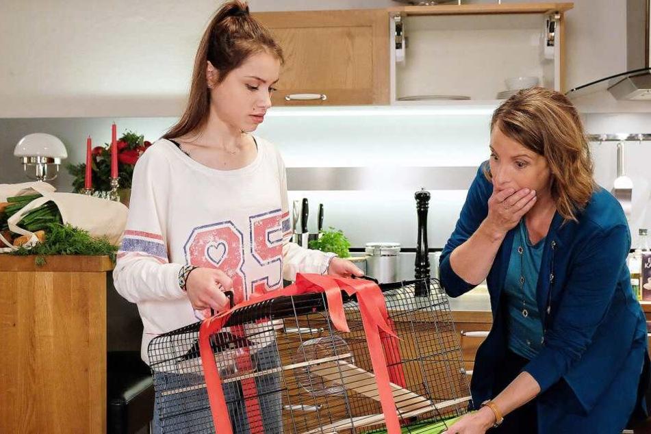 Katja Brückner kann es nicht glauben. Der Hamster, das Weihnachtsgeschenk für ihren Sohn Hanno, ist verschwunden. Und nun?