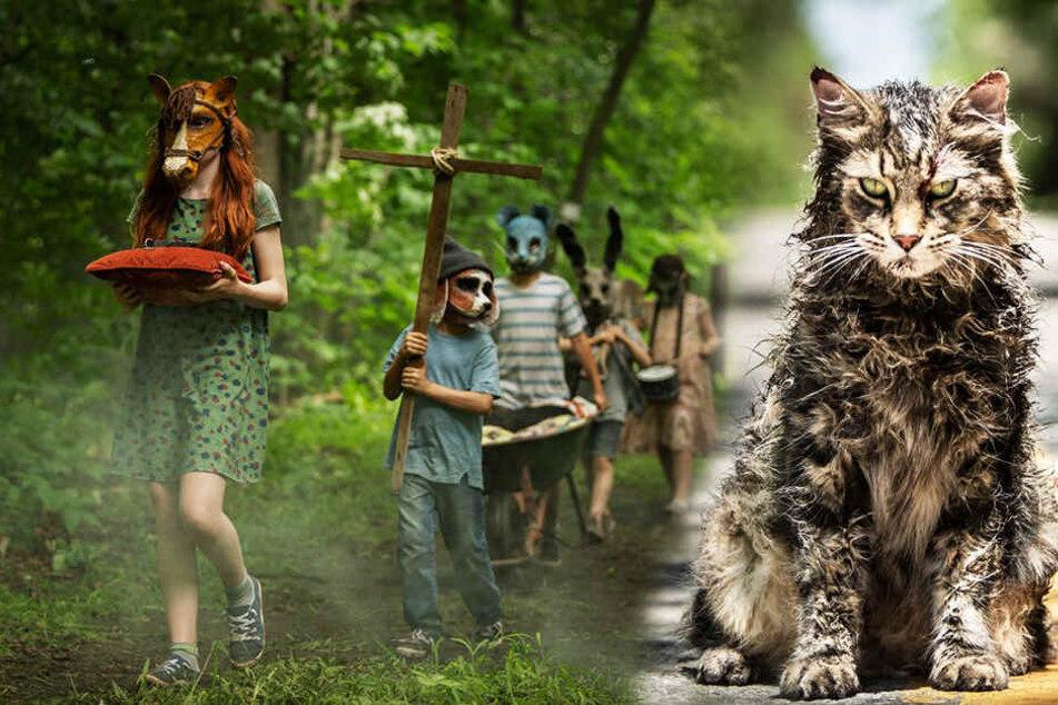"""Rituell werden auf dem mystischen Friedhof """"Pet Sematary"""" tief im Wald die Tiere begraben. (Bildmontage)"""