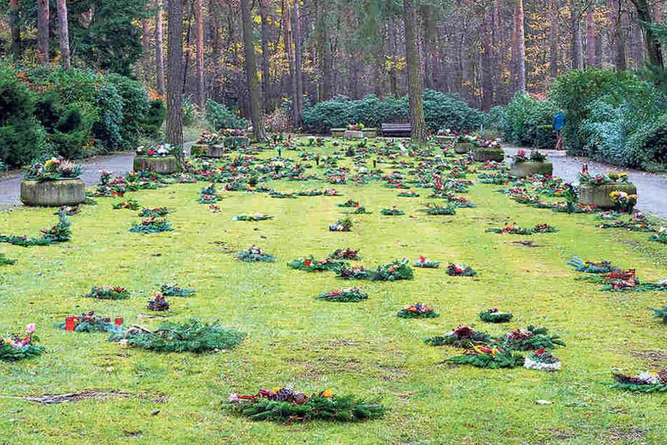 Die Nachfrage nach Baumgräbern steigt. Zurzeit arbeitet der Heidefriedhof an einer Erweiterungsfläche mit 100 Bäumen.