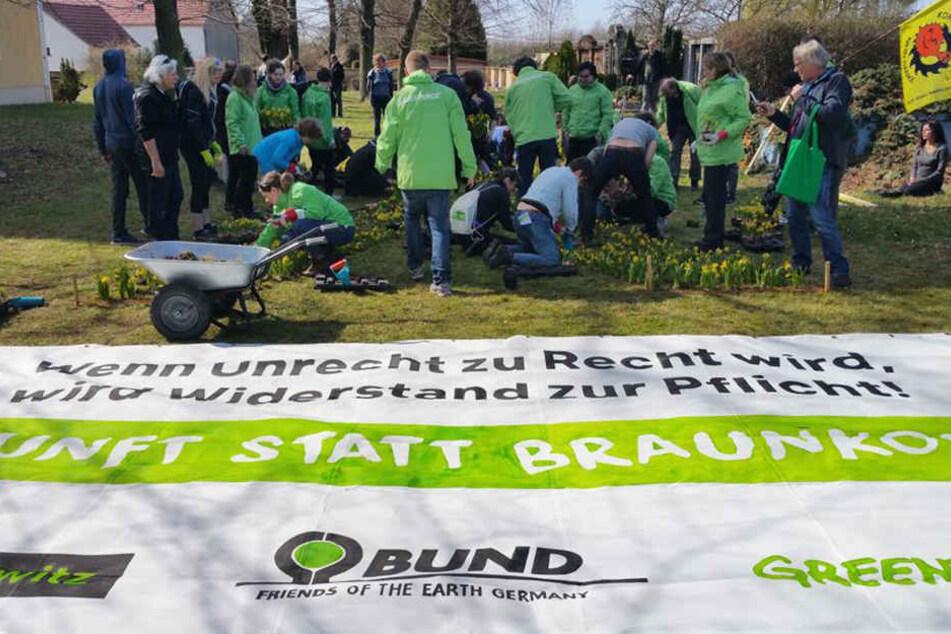 """1000 Narzissen in """"X""""-Form wurden von den """"Pro Pödelwitz""""-Aktivisten gepflanzt."""