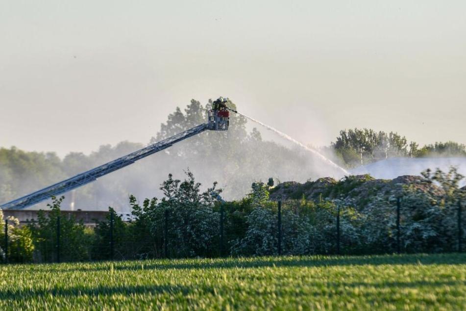 Mehrere Feuerwehren im Einsatz: Brand wütet auf Gelände von Putenfarm