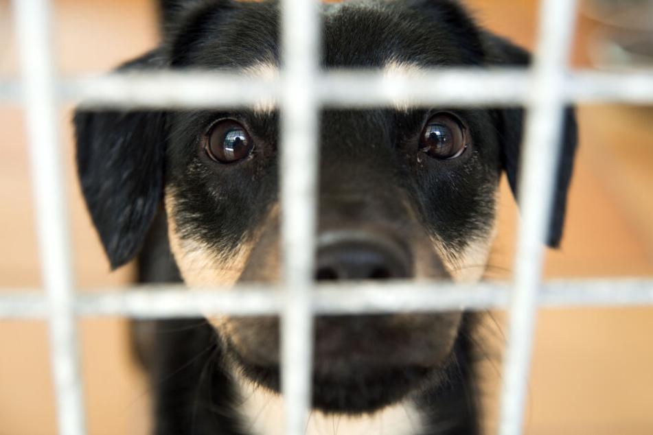 Weniger Tiere werden angesetzt, doch bei der Abgabe im Tierheim ist ein Halter selten ehrlich.