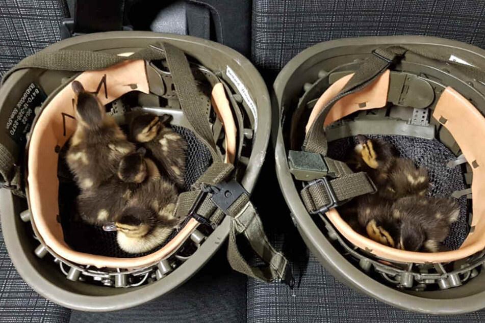 In ihren Helmen brachten die Bundespolizisten die Enten unter.