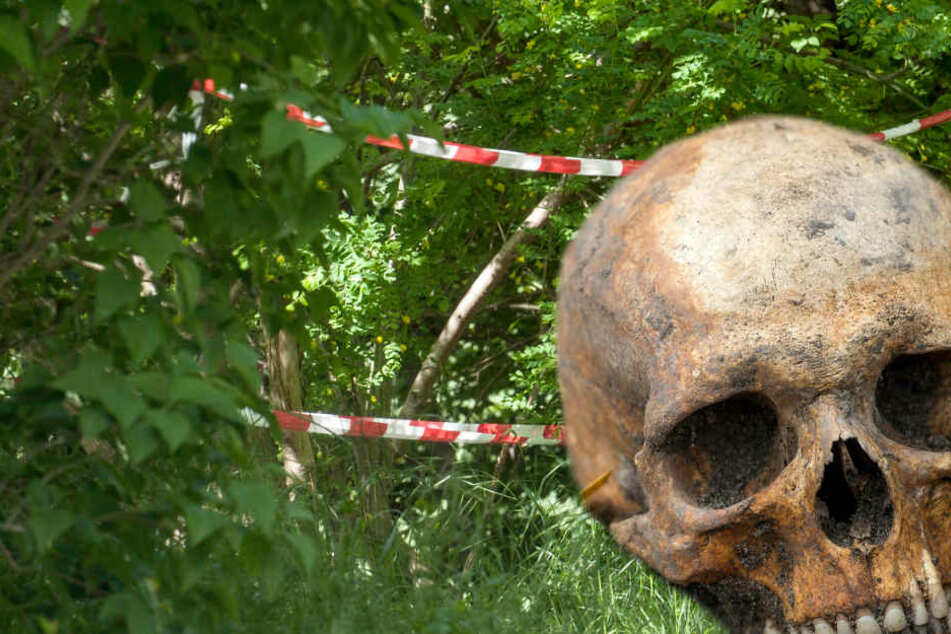 Horror-Fund: Pilzsammler stoßen auf Totenkopf