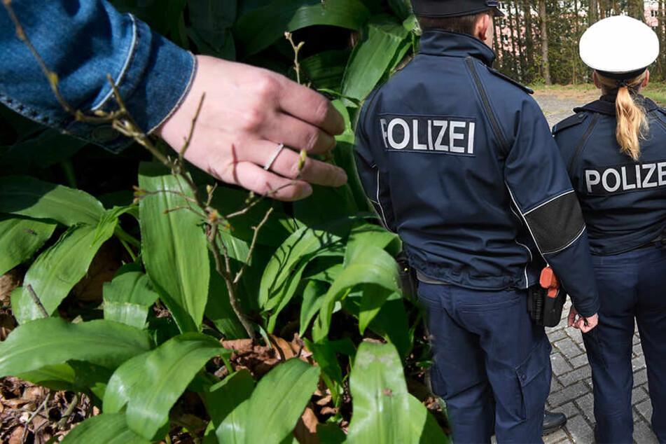 """Polizei erwischt """"Hobby-Gärtner"""" bei illegalem Treiben im Auwald"""