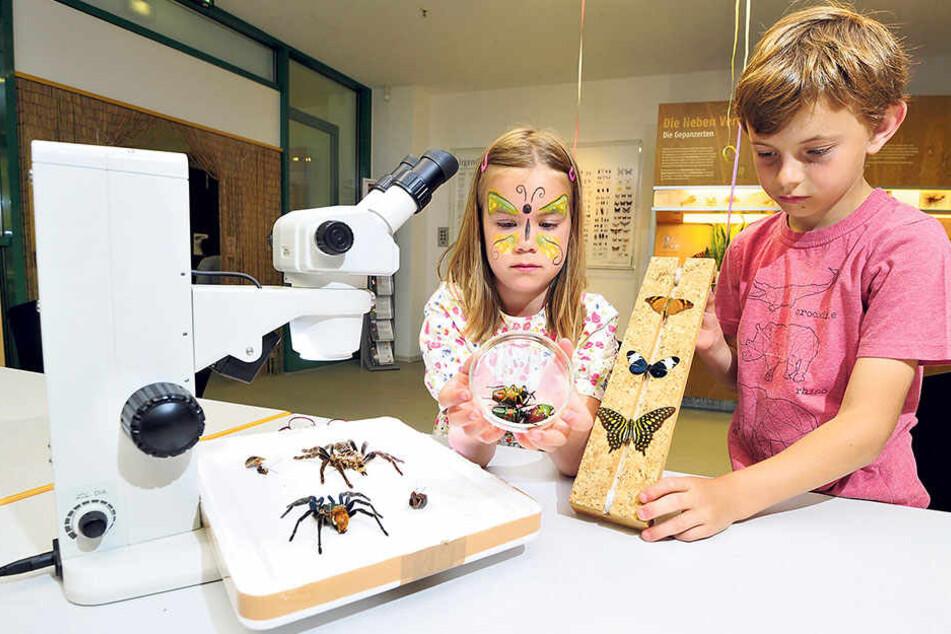 Clara (7) und Leo (11) betrachten Käfer, Schmetterlinge und Spinnen unter dem Mikroskop.