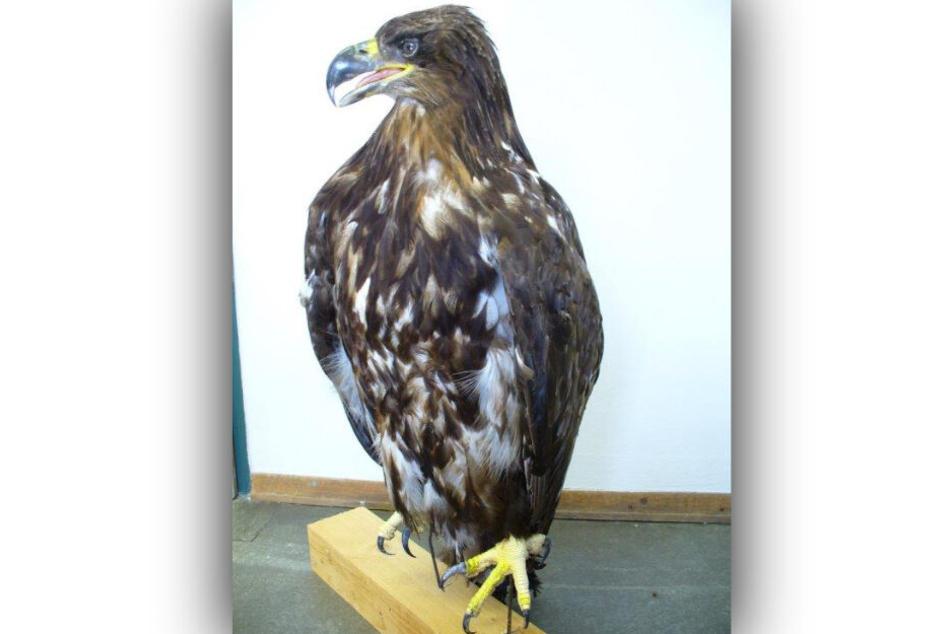 Der Adler wurde vom Zoll beschlagnahmt, weil keine ausreichenden Papiere beigelegt waren.