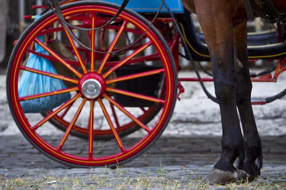 Als die Gespannlenkerin stürzte, ging das Pferd durch und galoppierte davon. (Symbolbild)