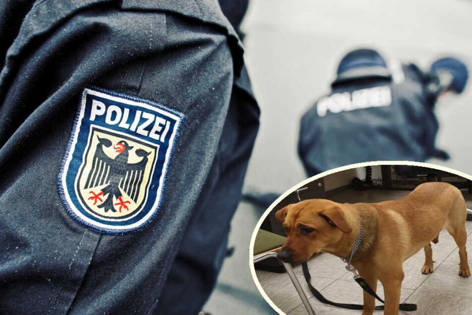 Schwarzfahrer dreht durch und hetzt seinen Hund auf Polizisten