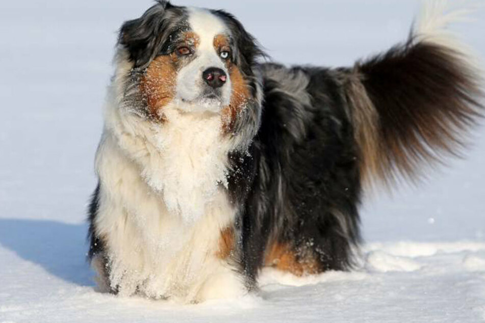 """""""Die Hunde können nichts dafür , dass ihre Halter bescheuert sind"""", so Julia in ihrem offenen Brief."""