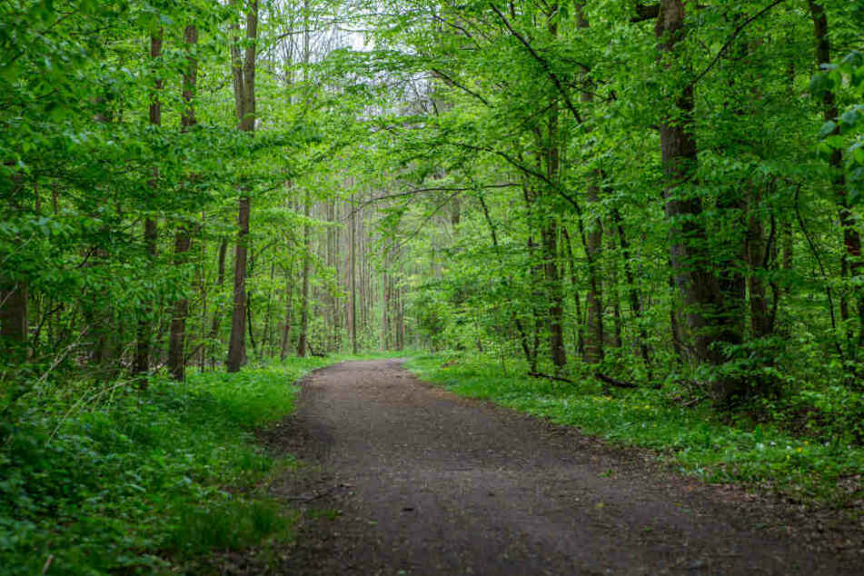 Der Auwald ist ein berühmtes Leipziger Naturschutzgebiet.