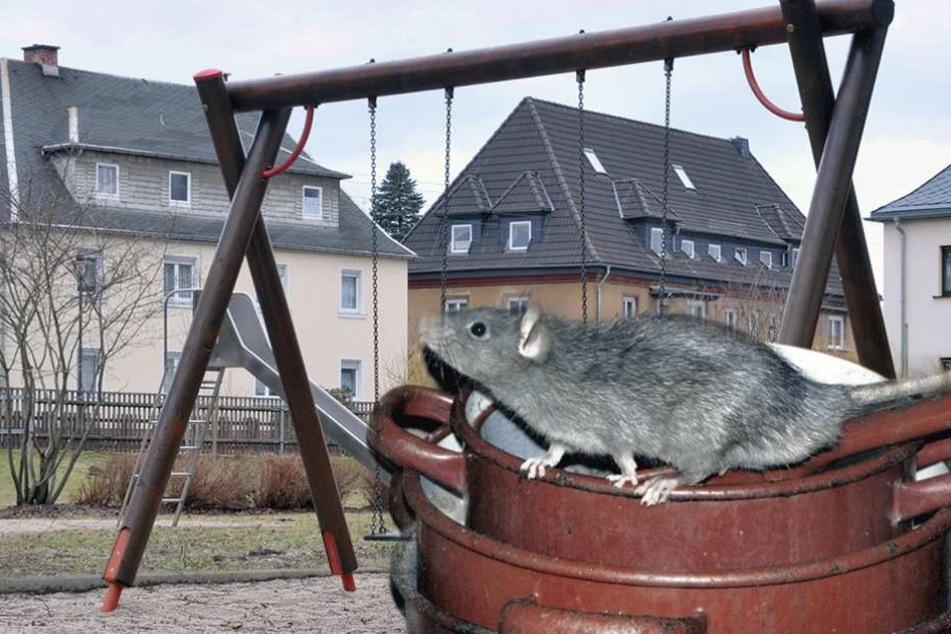Wegen Rattenbekämpfung muss ein Spielplatz in Wedding gesperrt werden (Symbolbild).
