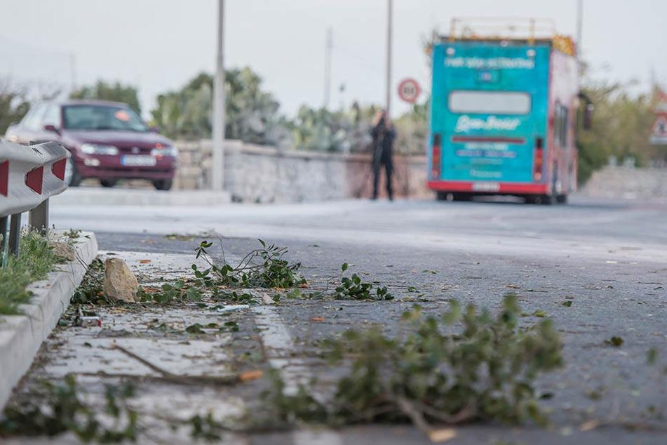 Der Touristenbus ist gegen tief hängende Baumäste eines auf der linken Seite der Straße stehenden Baumes gefahren.