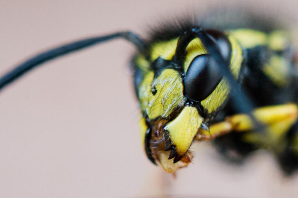 Wirklich gefährlich werden Wespen bei einem allergischen Schock.