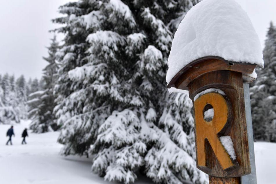 Rund um den Rennsteig kann man sich auf eine dichte Schneedecke freuen.
