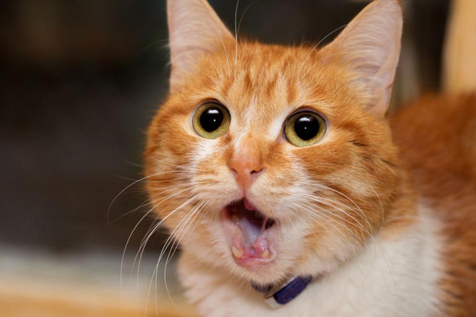 Eine Katze hatte laut Medienberichten den Brand in dem Kraftwerk ausgelöst. (Symbolbild)