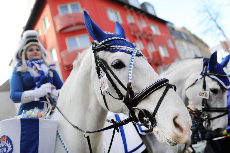 Eine Karnevalistin auf einem Pferd nimmt am Rosenmontagszug teil.