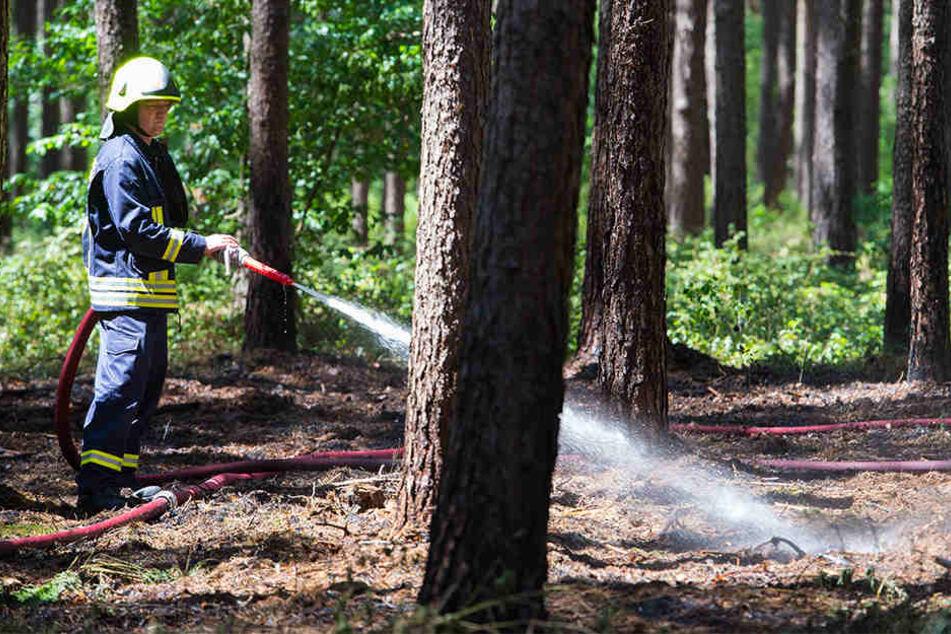 Trockenheit, hohe Temperaturen und Brandstiftungen haben 2016 zu vielen Waldbränden geführt. (Symbolbild)
