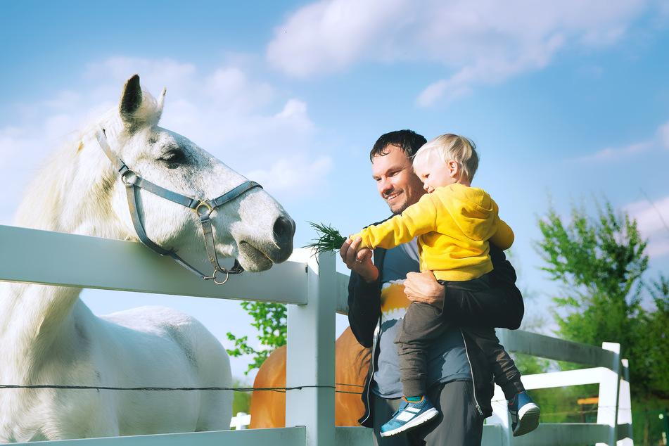 Immer mehr Väter nehmen sich eine berufliche Auszeit, um für ihre Kinder da zu sein.