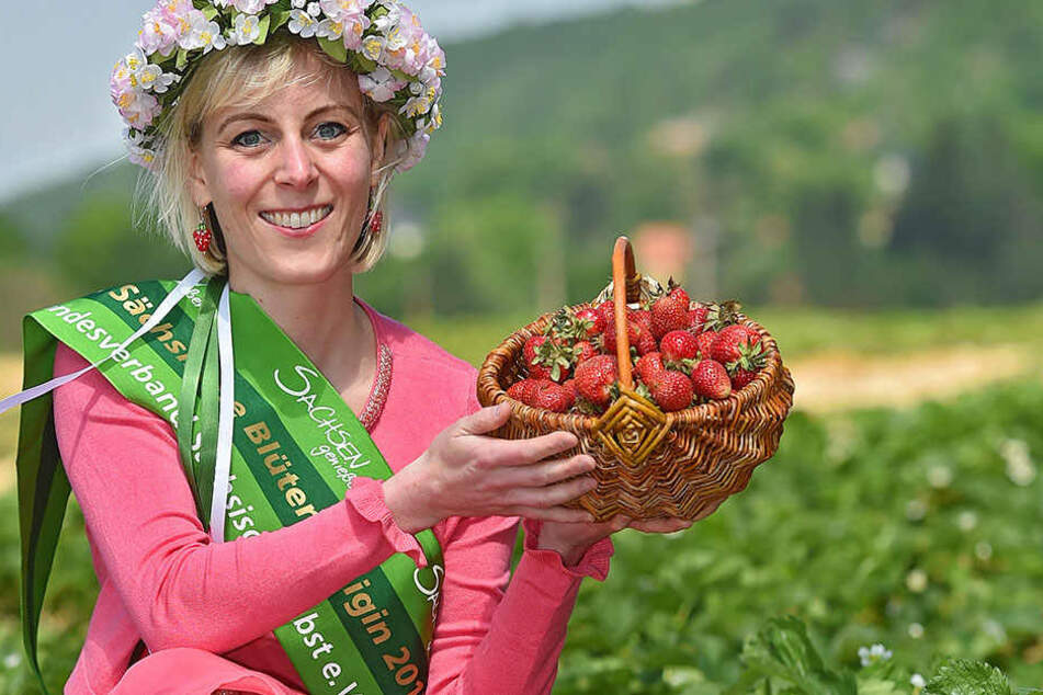 Süßer Saisonstart: Blütenkönigin Antje Uhlig (32) hat schon (vor-)gereifte Erdbeeren im Körbchen.