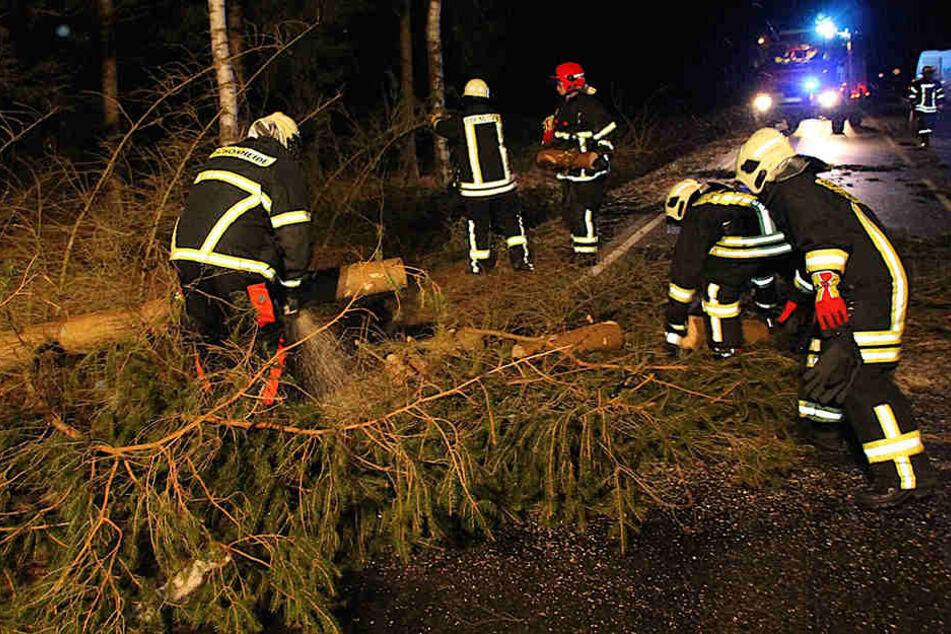 """Sturmnacht in Sachsen: """"Thomas"""" knickt unzählige Bäume um"""