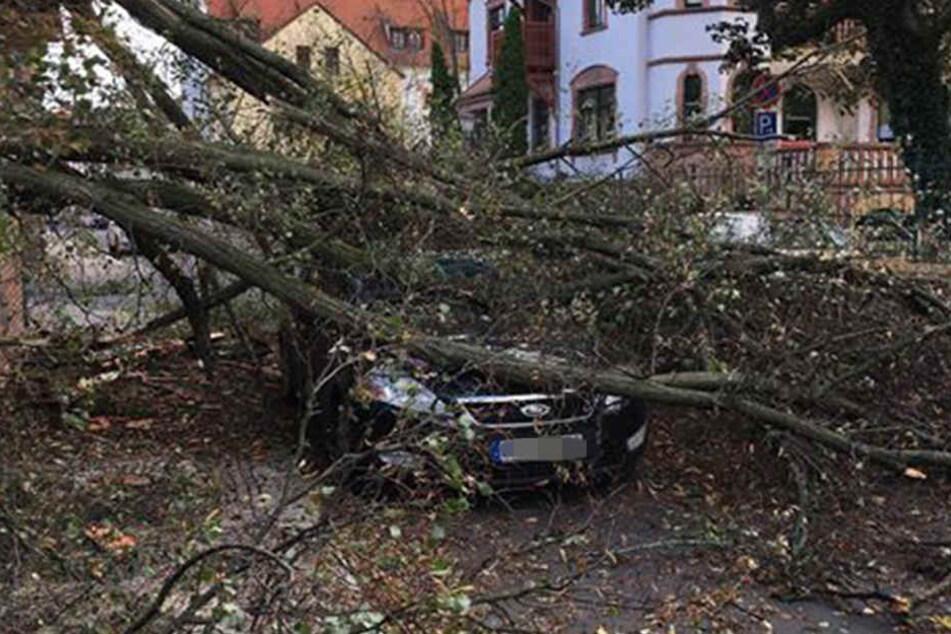 In Grimma wurden mehrere Autos beschädigt.