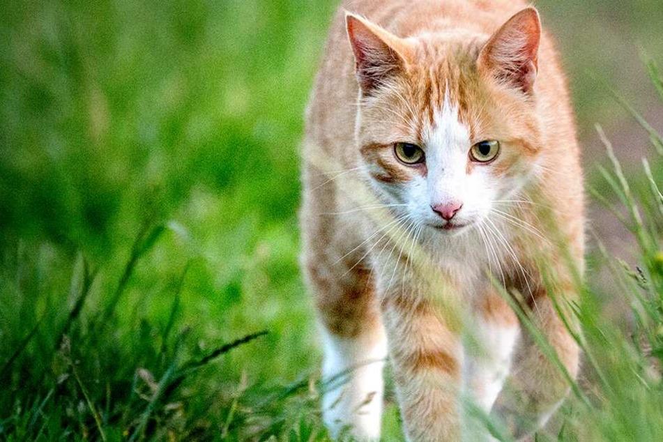 Der Pfeil steckte noch in ihr! Unbekannter schießt auf hilflose Katze