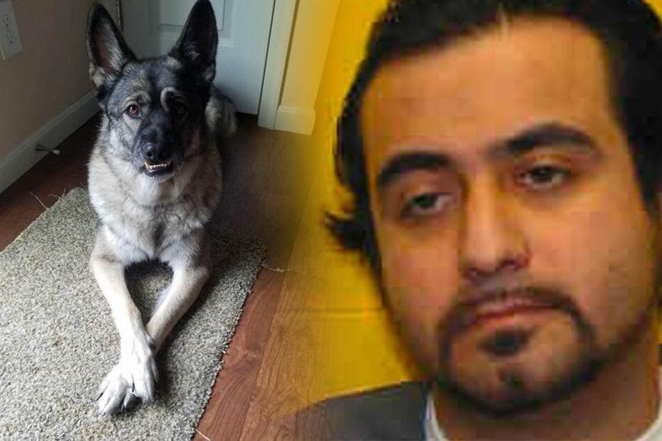 Sie sollte ihm helfen: Insasse prügelt Hündin in Gefängnis zu Tode