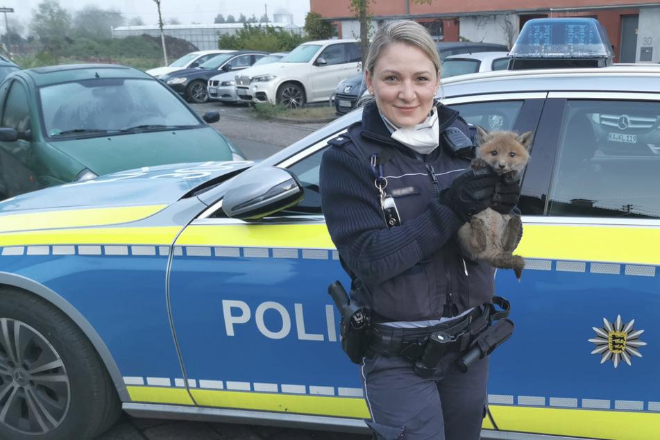 Tierischer Einsatz: Polizei rettet Fuchs aus misslicher Lage