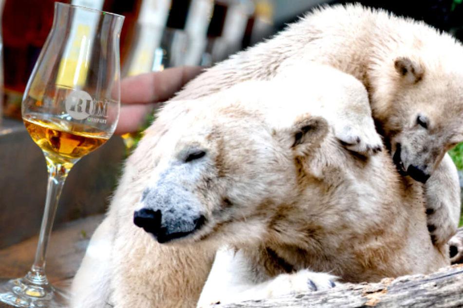 Wilde Tiere und leckere Drinks: So wird Euer Sonntag in Berlin perfekt!