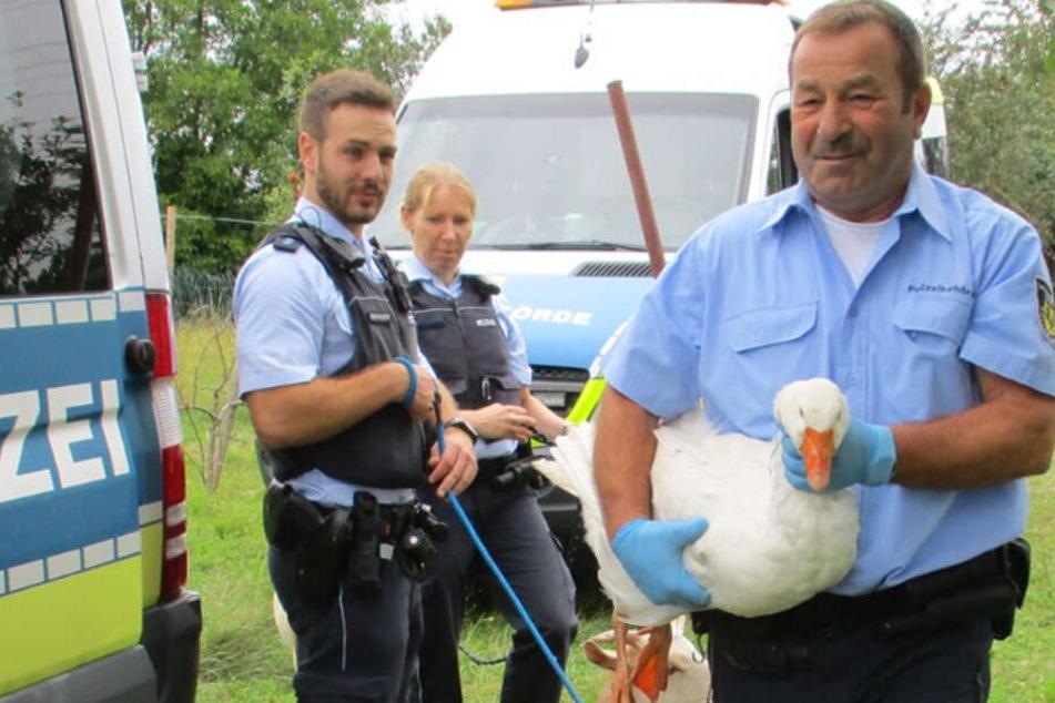 Polizei rettet die Tiere, die noch lebten.