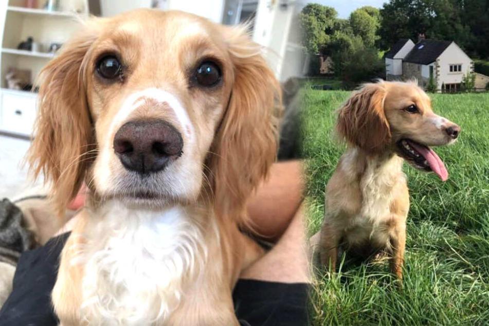 Süßer Hund stirbt beim Gassi gehen, weil jemand sich fatal irrt
